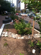 DC Urban rain garden: looking north on 19th St.