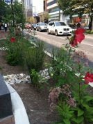 DC Urban Rain Garden: looking north from the middle of the garden